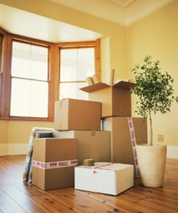 Removal boxes and potted plant in empty room
