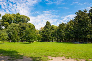 flat grassy area with trees