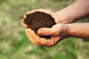 a buyer holding a handful of dirt